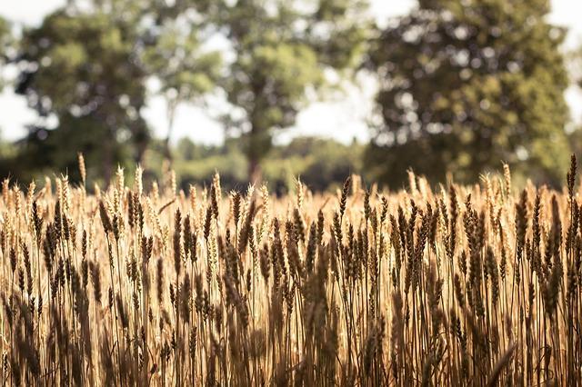 soil microbes sustainability farming